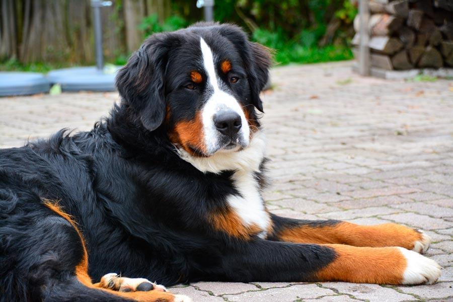 Chalet urlaub mit hund erlebnisbauernhof proneben gut h ttenurlaub m hlbach for Urlaub auf juist mit hund