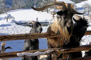 Winter-Streichelzoo am Erlebnisbauernhof
