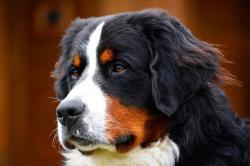 Chalet Urlaub mit Hund am Erlebnisbauernhof Proneben Gut