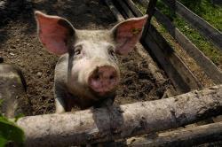 Tiere am Erlebnisbauernhof Proneben Gut