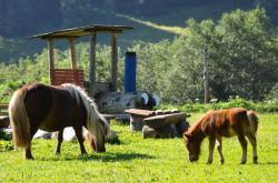Reiten am Erlebnisbauernhof | Das Glück der Erde am Rücken der Pferde!