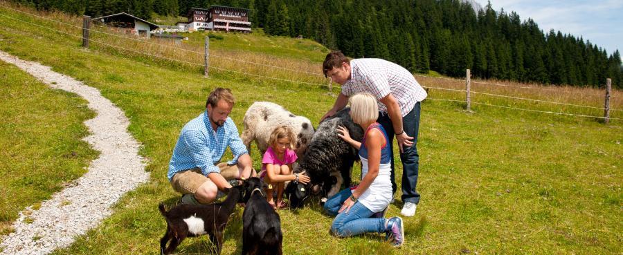 Das Bergdorf der Tiere