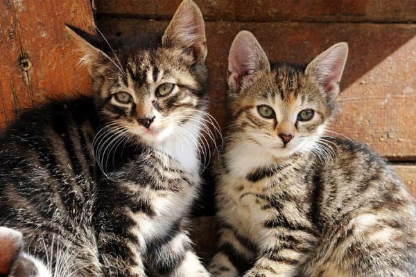 Unsere beiden Hof-Katzen ganz lieb und freundlich