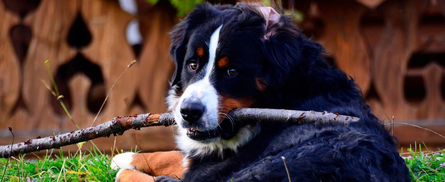 Chalet Urlaub mit Hund am Bauernhof