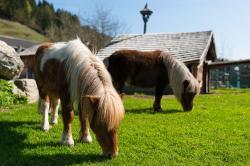 Unsere Ponnies